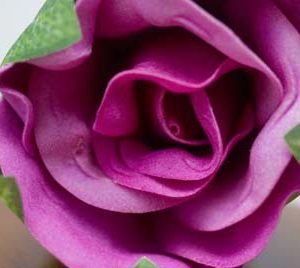 Single lavender rose